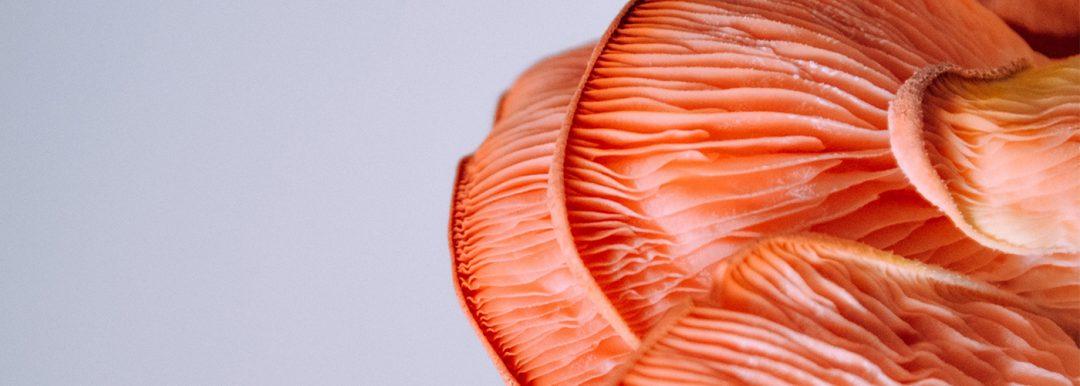 magic mushrooms strain cataologue online