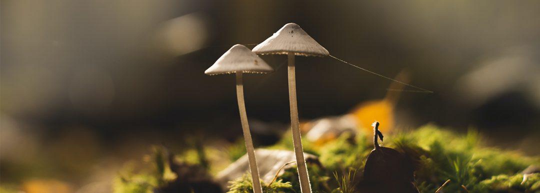 microdose mushrooms begginers guide